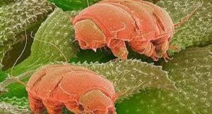 Mikroskop Kendi sınırlarını-bizsizizZorluyor