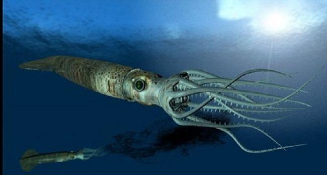 ahtapot-kalamar-mürekkep balığı-3bizsiziz