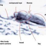 Photos show evidence of life on Mars, Ohio entomologist claims