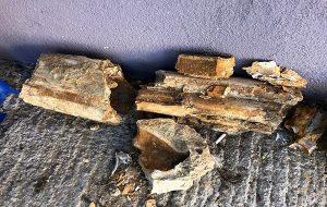 Edirne Kum Ocağında Bulunan Kemikler 8 Milyon Yıllık Mamut Fosili Çıktı.