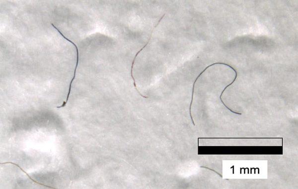 Mikroplastiklere, Everest Dağı'nın Zirvesinde Rastlanması Bilim İnsanlarını Şaşırttı.