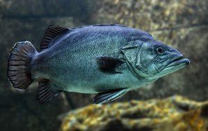 Bu Balık