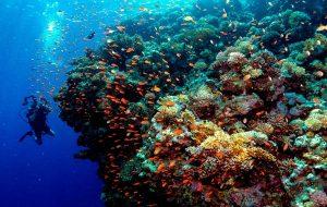 Mercan Resiflerini
