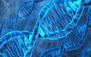 Yeni Araştırma Türlerin Evriminin ABC'sini Açıklıyor