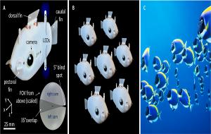 Dünyanın ilk Senkronize Balık Sürüsü Robotu Geliştirildi