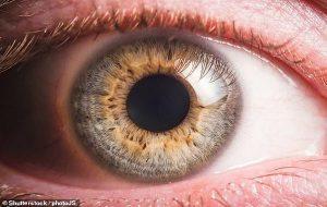 İnsan Kadavrasından Alınan Retina Kök Hücreleri Körlüğü Giderebilir