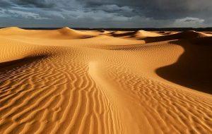 Yapay Zeka Sahra Çölü'nde Yüz Milyonlarca Ağacı Ortaya Çıkardı