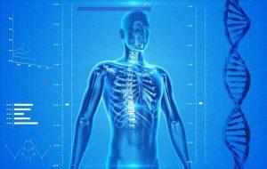 Skeletons reveal humans