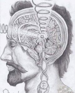 Bilim İnsanları İnsan Beyninde