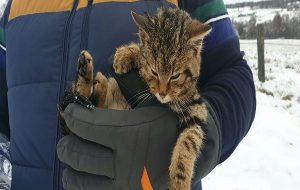 Donmaktan Kurtardığı Canlının Kedi Olduğunu Düşünürken Nesli Tükenmekte Olan Bir Tür Olduğunu Öğrendi