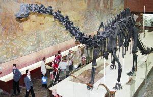Dinozorların Neden