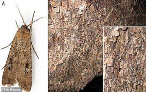 2000 Yıllık Taş Değirmende Böceklerin Gıda Olarak Tüketilmesinin En Eski Arkeolojik
