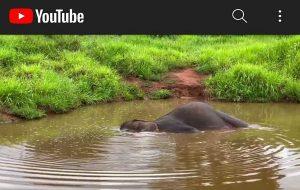 Filler Dakikada Yaklaşık 6 Kez Nefes Alır. Karşınızda Maia!
