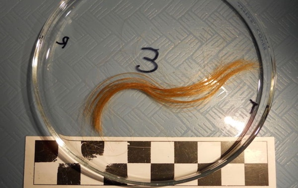 Saçlar Ölümün Mevsimselliği Hakkında Önemli Bilgiler Veriyor