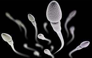 Yaşam Yarışında Bazı Spermler Rakiplerini Zehirlediği Keşfedildi