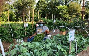 Gönüllüler En Büyük Ücretsiz Gıda Ormanını Oluşturuyor