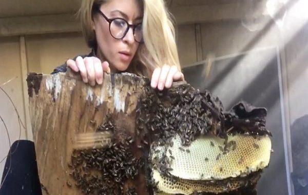Arıları Kurtarırken Çektiği Video Arılara Fısıldayan Kadın Unvanı Almasını Sağladı
