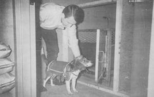 CIA Gizli Dosya Olarak Sakladığı Uzaktan Kumandalı Köpek Deneyini İtiraf Etti