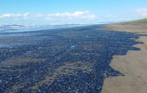 Kıyıya Vuran Milyonlarca