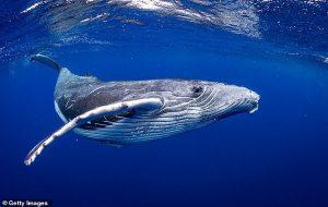 Balinalar 50 Milyon Yıl Önce Karada Yürüyen Dört Ayaklı Bir Hayvandı