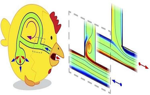 How do birds breathe