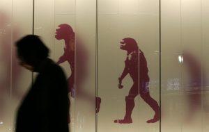 İnsanı Diğer Primatlardan
