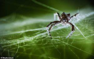 Bilim İnsanları Örümcek Ağının Yapısındaki Titreşimleri Müziğe Dönüştürdü