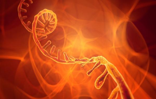 Yaşamın Temeli DNA