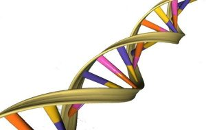 DNAnın Kendi Kendini Onarım