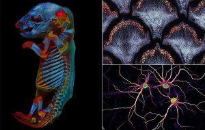 Mikroskop Altında Çekilen Bilim Fotoğrafları Yarışmasının Kazananları Belli Oldu