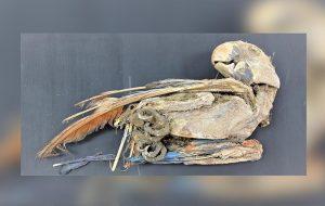 Mumyalanmış Kuş Kalıntıları