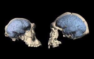 Modern human brain originated