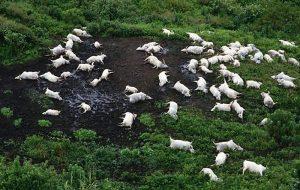 1986da Bir Gecede 1746 Kişiyi ve Binlerce Hayvanı Öldüren Nyos Gölü