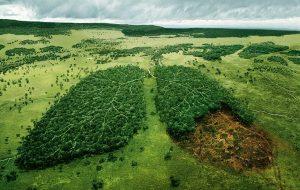 Tüm Gezegeni Ormanlarla Kaplasak Bile Neden İklim Değişikliğini Durduramayız?