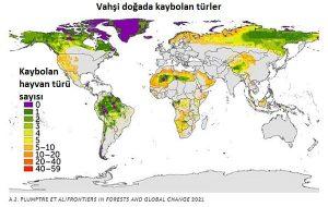 Dünya Topraklarının Sadece %3'ü Ekolojik Olarak Bozulmamış!