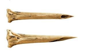 Kızılderili Mezarından Çıkarılan Bu Kemikler Dünyanın En Eski Dövme Aletleri Olabilir