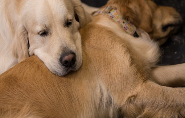 Köpeklerin Ömrünü Uzatma