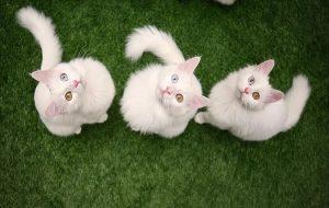 Kedilerin Sık Sık