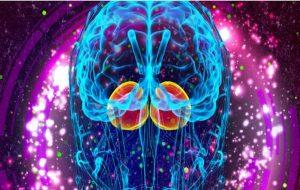 Beynimizin Duygu Fabrikası Olan Limbik Sistemin Varoluşumuzdaki Önemi