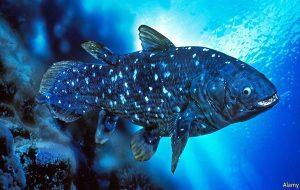 Yeni Balık Keşfi