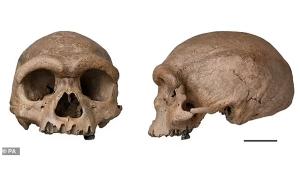 """150.000 Yıl Önce Yaşamış, Kare Göz Yuvalarına Sahip """"Ejder Adam"""" Kimdi?"""