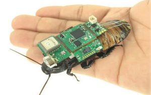 Sırtına Kameralı Çip Takılan Hamam Böcekleri Afetzedeleri Bulmak İçin Kullanılacak