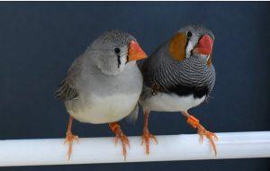 Kuşların Cıvıltılarını Sözcüklere