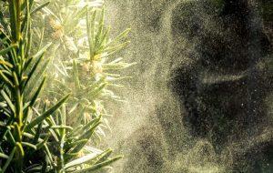 Covid Ağaçlarla Yayılabilir mi? Bilim İnsanları, Ciddiye Alınması Konusunda Uyarıyor