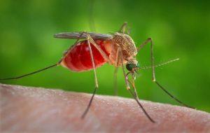 Sivrisinekler Neden