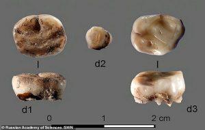 31000 Yıllık Dişler 500.000 Yıldan Daha Önce Neandertallerin de Soğuk Algınlığı Yaşadığını Gösterdi