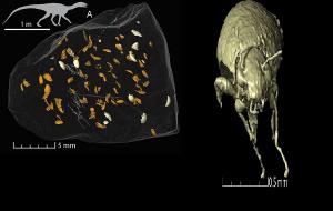 Dünyanın En Eski Böcekleri Bir Dinozorun Fosilleşmiş Dışkısında Bulundu(Video)