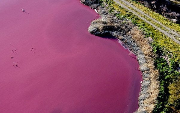 A Lagoon in Argentina Turned Bright Pink, But This Time The Reason Is Unnatural