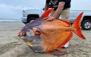 100 Kiloluk Dev Ay Balığı İklim Değişikliği Yüzünden Kuzeye Kaçarken Ölü Bulundu