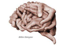 Beyinde Öğrenmede Kilit Rol Oynayan Bir Bölge Bulundu
